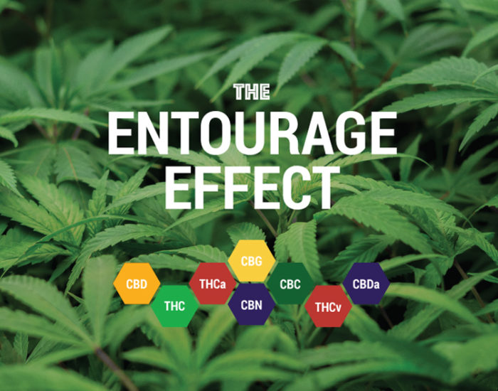 entourage-effect